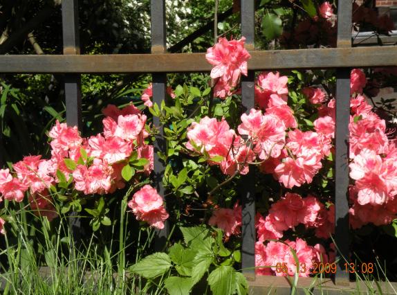 flowers-behind-bars1