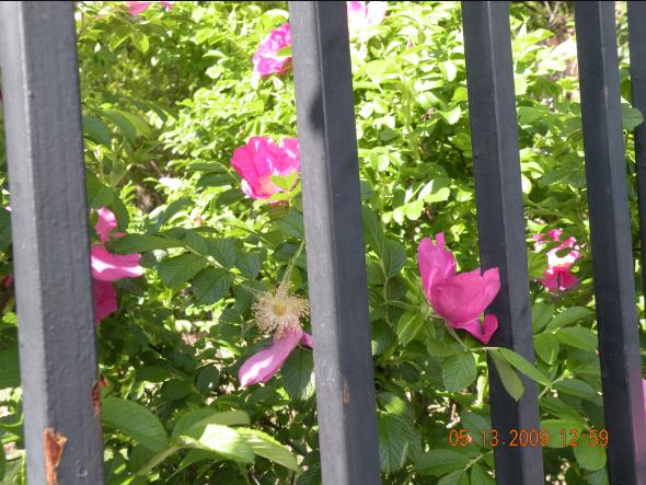 flowers-behind-bars2