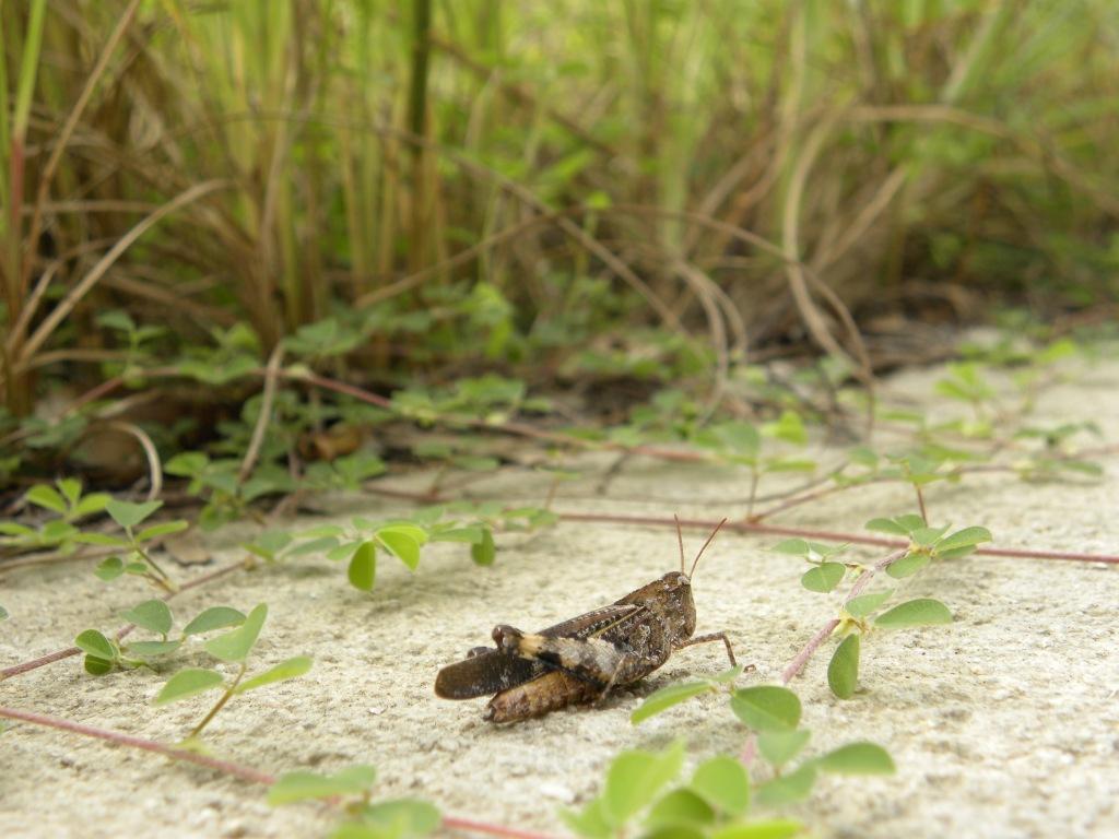Cementhopper? or a Grasshopper