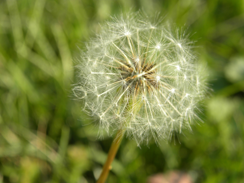 wildflower 2