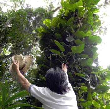 cypress-garden-mother-nature