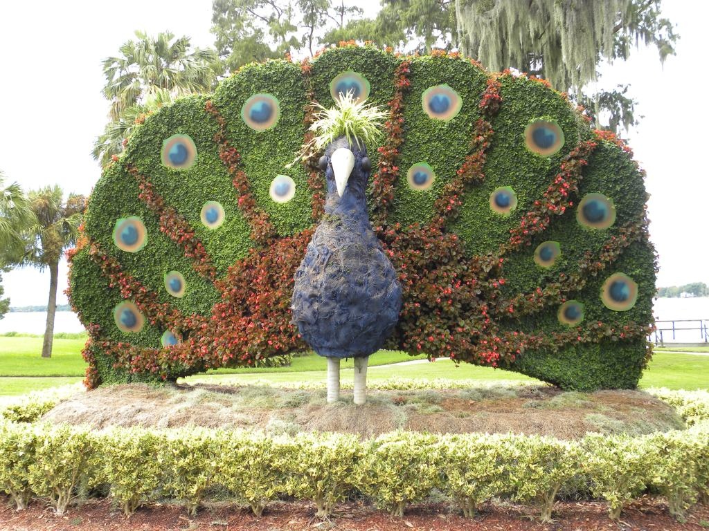 Peacock made of plants