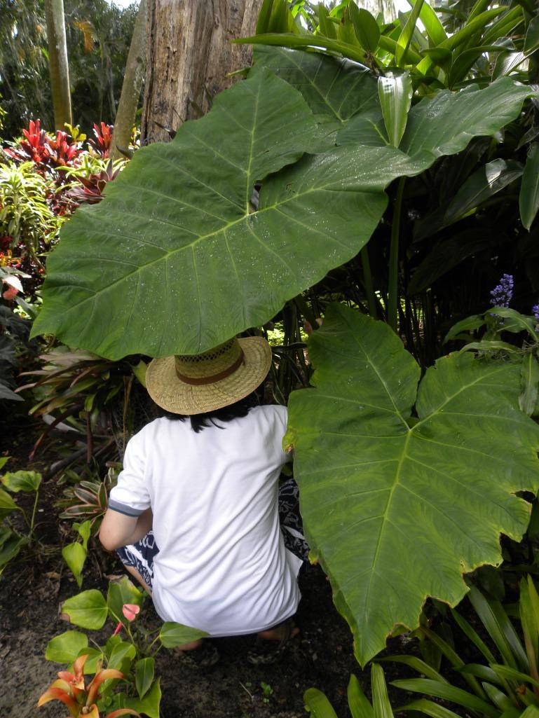 Gabi na pueding umbrella pag uulan