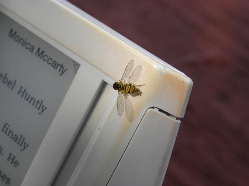 reading-bee