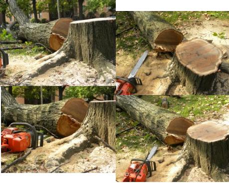 the chainsaw and the tree